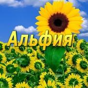 Альфия Исмагилова в Моем Мире.