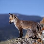 Животные планеты + домашние любимцы. group on My World