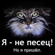 Black Cat on My World.