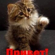Котик Серый on My World.