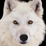 сибирская волчица on My World.